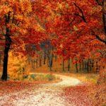 Jesień – idealny czas na spacery po lesie