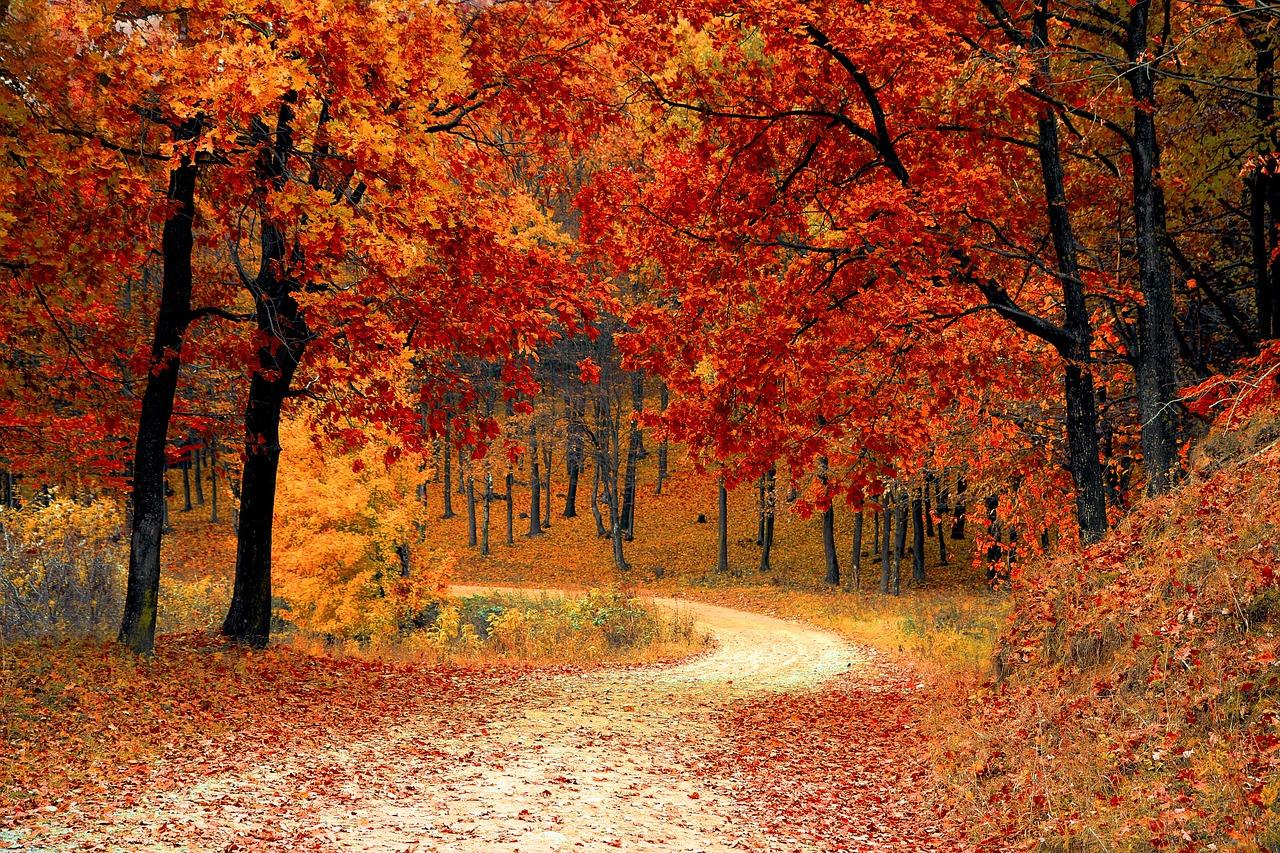 jesienna kultura