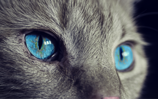 Efektywny kontakt wzrokowy